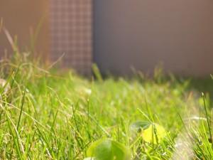 芝がのびてきました。。